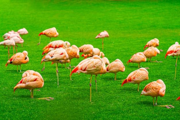 Grupa Piękni Flamingi śpi Na Trawie W Parku Darmowe Zdjęcia