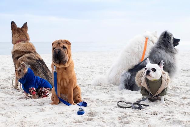 Grupa Psów Jest Zaangażowana W Posłuszeństwo. Szkolenie Psów Na Plaży. Premium Zdjęcia