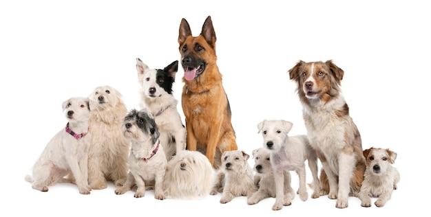 Grupa Psów: Owczarek Niemiecki, Border Collie, Parson Russell Terrier I Trochę Mieszańców Premium Zdjęcia