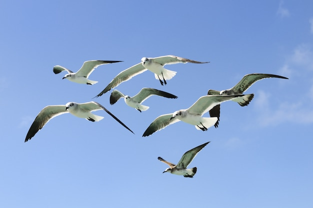 Grupa Seagulls Lata W Niebie Premium Zdjęcia