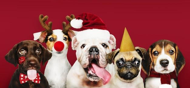 Grupa szczeniąt w strojach bożonarodzeniowych Darmowe Zdjęcia