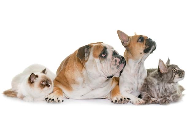 Grupa zwierząt domowych Premium Zdjęcia