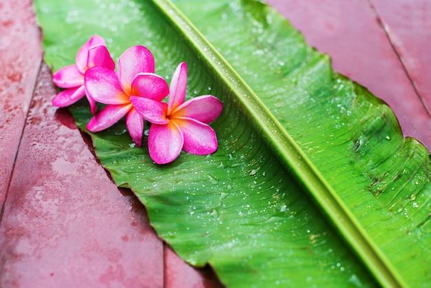 Grupowy Różowy Frangipani Na Zielonym Palmowym Liściu Premium Zdjęcia