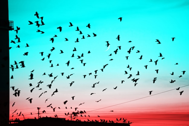 Grupy ptaków latających nad dachem o zachodzie słońca na tle księżyca. Premium Zdjęcia