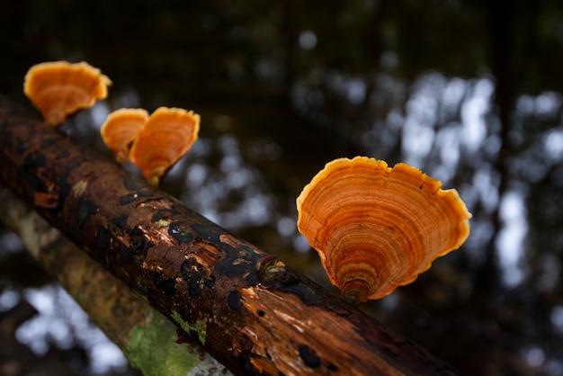 Grzyb Leśny Na Drewnie W Dżungli Przyrody - Na Zewnątrz Jesień Dziki Grzyb Czerwony Premium Zdjęcia