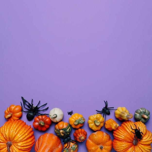 Halloweenowe Banie I Pająki Z Kopią Miejsca Na Górze Darmowe Zdjęcia