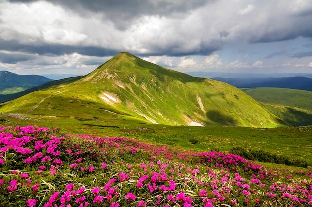 Halna Wiosny Panorama Z Kwitnącymi Rododendronowymi Ruciowymi Kwiatami I łatami śnieg Pod Błękitnym Chmurnym Niebem. Premium Zdjęcia