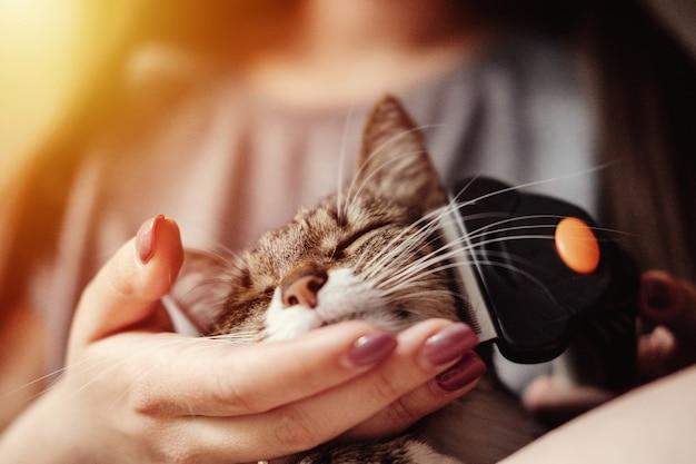 Higiena, pielęgnacja zwierząt domowych, czesanie wełny od kota, pielęgnacja sierści Premium Zdjęcia