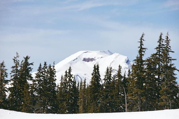 Hipnotyzująca Sceneria Jodły W Deschutes National Forest W Oregonie Darmowe Zdjęcia