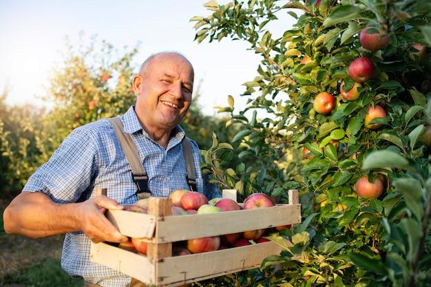 Hodowca Jabłek W Sadzie Owocowym Darmowe Zdjęcia
