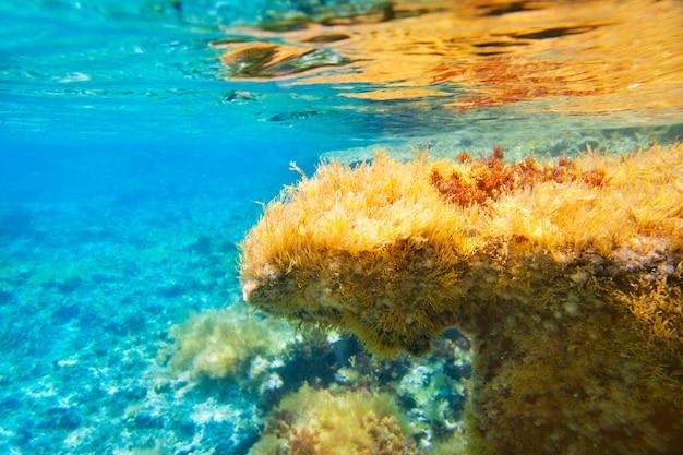 Ibiza Formentera Podwodny Anemonowy Krajobraz Premium Zdjęcia