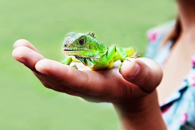 Iguana Na Dłoni Premium Zdjęcia