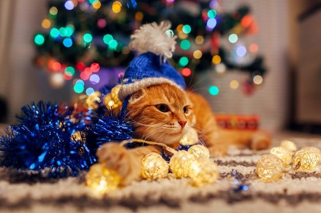 Imbirowy kot nosi czapkę mikołaja pod choinką, bawiąc się lampkami i świecidełkami. koncepcja bożego narodzenia i nowego roku Premium Zdjęcia