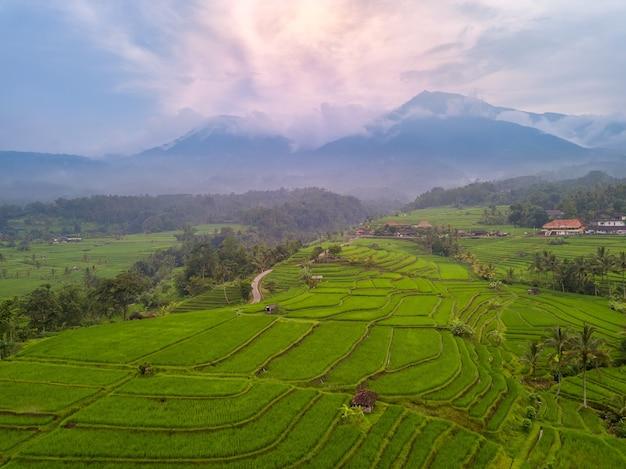 Indonezja. Wyspa Bali. Wieczór Nad Tarasami Ryżowymi. Mgła W Górach Po Deszczu. Widok Z Lotu Ptaka Premium Zdjęcia
