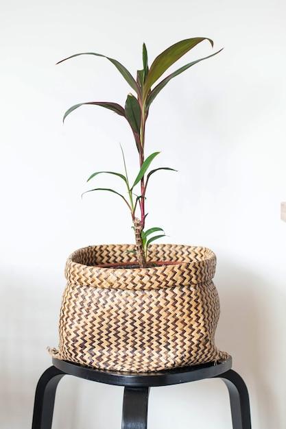 Indoor Zielona Roślina W Doniczce Z Wikliny. Dekorowanie Przestrzeni życiowej Zielonymi Roślinami. Roślina Domowa. Skopiuj Miejsce. Wysokiej Jakości Zdjęcie Premium Zdjęcia