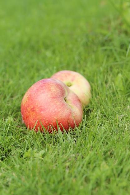 Jabłka na trawie Darmowe Zdjęcia