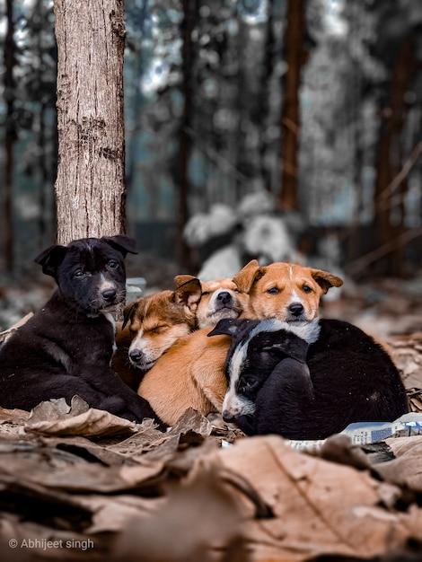 Jamniki Trzy Kolorowe Psy Premium Zdjęcia