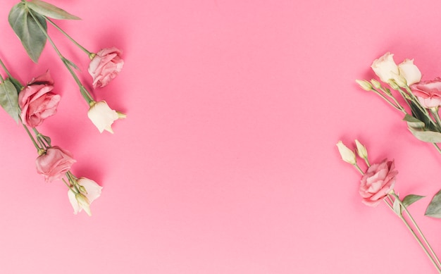 Jasne kwiaty róży na różowym tle Darmowe Zdjęcia