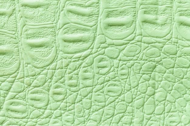 Jasnozielony Rzemienny Tekstury Tło, Zbliżenie. Skórka Gadów, Makro. Premium Zdjęcia