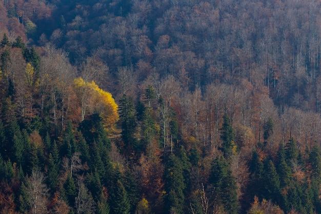Jesień W Lesie Na Górze Medvednica W Zagrzebiu, Chorwacja Darmowe Zdjęcia