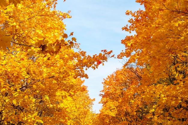 Jesień W Parku Premium Zdjęcia