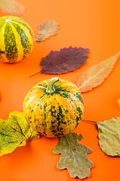 Jesień z dyniami i liśćmi Premium Zdjęcia