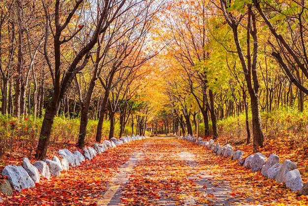 Jesienna droga w parku Premium Zdjęcia