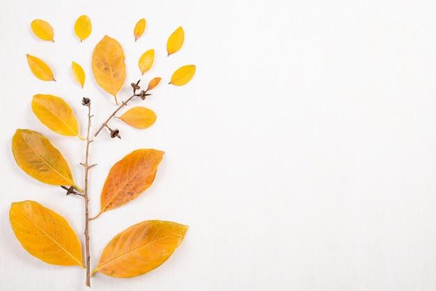 Jesienna kompozycja. spadać kolor żółty opuszcza i rozgałęzia się na białym tle. Premium Zdjęcia