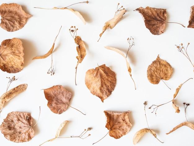 Jesienna Kompozycja. Suszone Liście Lipy I Kwiaty Na Białym Tle. Jesień, Jesień, Koncepcja święto Dziękczynienia. Flat Lay, Widok Z Góry, Premium Zdjęcia