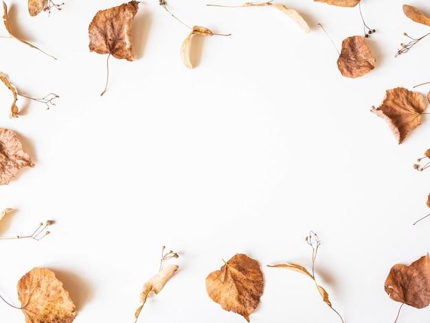 Jesienna Kompozycja. Suszone Liście Lipy I Kwiaty Na Białym Tle. Jesień, Jesień, Koncepcja święto Dziękczynienia. Leżał Płasko, Widok Z Góry, Miejsce Na Kopię Premium Zdjęcia