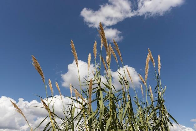 Jesienne Rośliny I Tło Pochmurnego Nieba Premium Zdjęcia