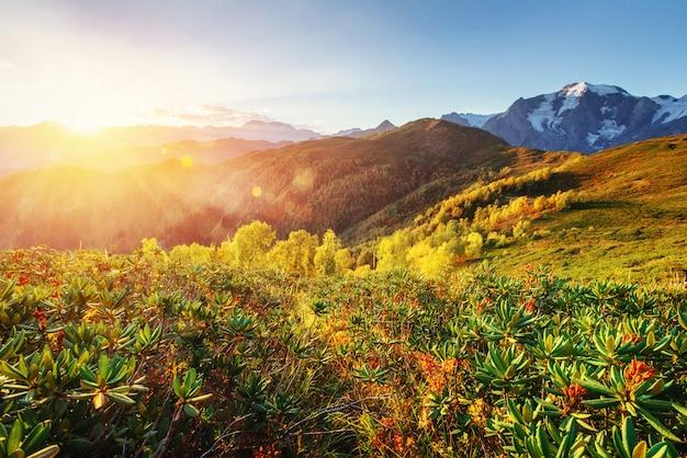 Jesienny Krajobraz I Ośnieżone Szczyty Górskie. Karpaty. Ukraina. Europa Premium Zdjęcia