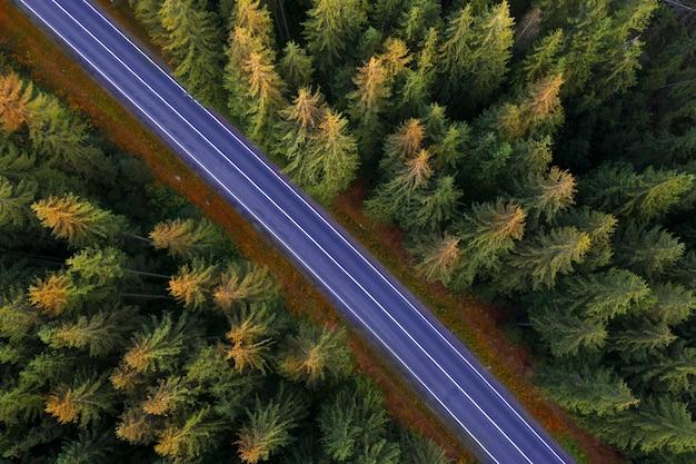Jesienny Krajobraz Utwardzona Droga W Górskim Lesie Premium Zdjęcia