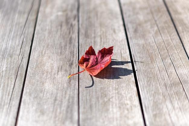 Jesienny Liść Klonu Na Podłoże Drewniane, Widok Z Góry Premium Zdjęcia