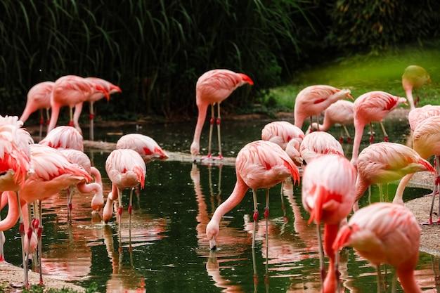 Jezioro Z Pięknymi Różowymi Flamingami Otoczonymi Bujnymi Roślinami W Słoneczny Dzień Premium Zdjęcia