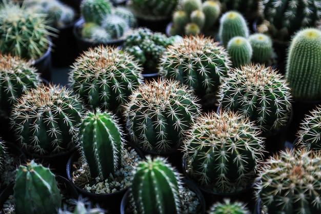 Kaktus W Puli Kolekcji Premium Zdjęcia