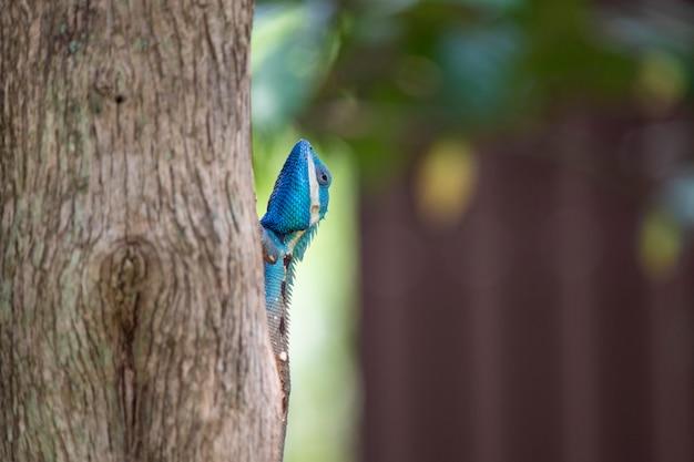 Kameleon, Jaszczurka, Gatunki Kameleona W Tropikalnym Lesie Premium Zdjęcia