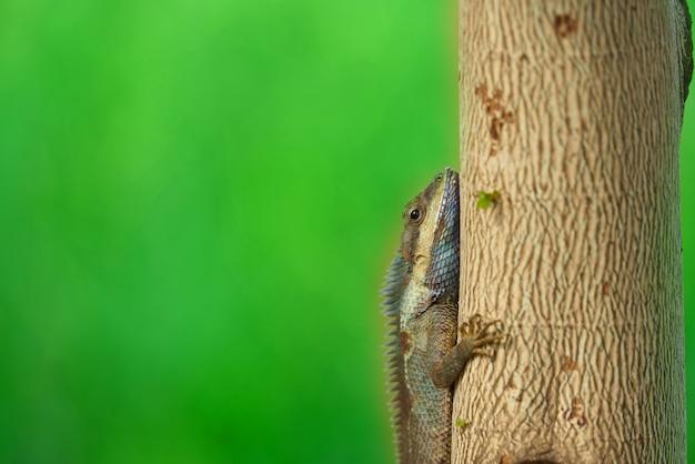 Kameleon Na Drzewie Na Plamy Tle, Zamykającym Up Premium Zdjęcia