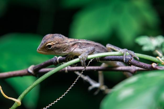 Kameleon Na Drzewie Premium Zdjęcia