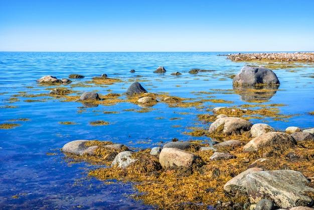 Kamienie I Glony W Błękitnej Wodzie Morza Białego Na Wyspach Sołowieckich W Promieniach Jesiennego Słońca Premium Zdjęcia