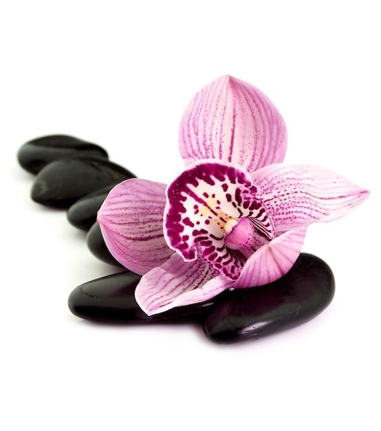 Kamienie Z Kroplami Wody I Kwiatem Orchidei Premium Zdjęcia