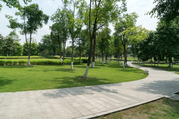 Kamienna Droga W Bujnym Zielonym Parku Premium Zdjęcia