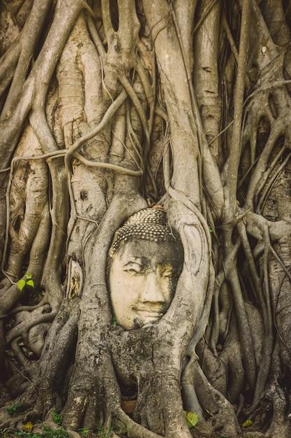 Kamienna Głowa Buddha Otaczająca Drzewem Zakorzenia W Wata Prha Mahathat świątyni W Ayutthaya, Tajlandia Premium Zdjęcia