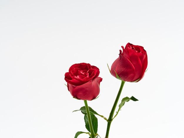 Karta walentynkowa. dwie czerwone róże. Premium Zdjęcia