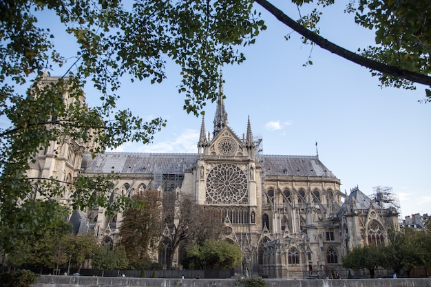 Katedra notre dame de paris.paris. francja Premium Zdjęcia