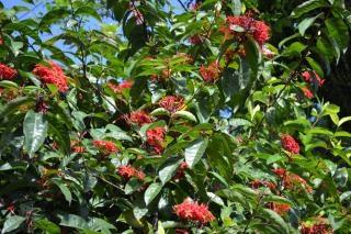 Kępa Czerwonych Kwiatów Darmowe Zdjęcia