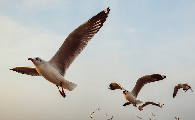 Kierdel seagulls lata w niebie Darmowe Zdjęcia