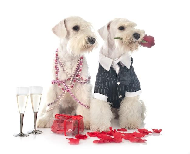 Kilka Psów Ubranych Na Walentynki Premium Zdjęcia
