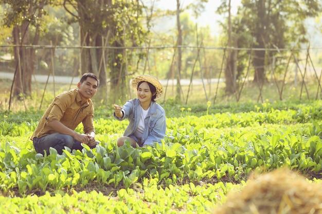 Kilku Rolników Zajmuje Się Przetwarzaniem Organicznych Warzyw. Para Chętnie Uprawia Warzywa, Które Można Bezpiecznie Sprzedać. Premium Zdjęcia