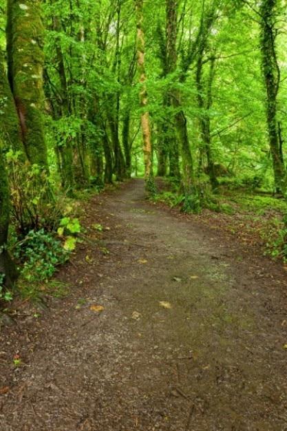 Killarney Park Leśny Szlak Hdr Darmowe Zdjęcia